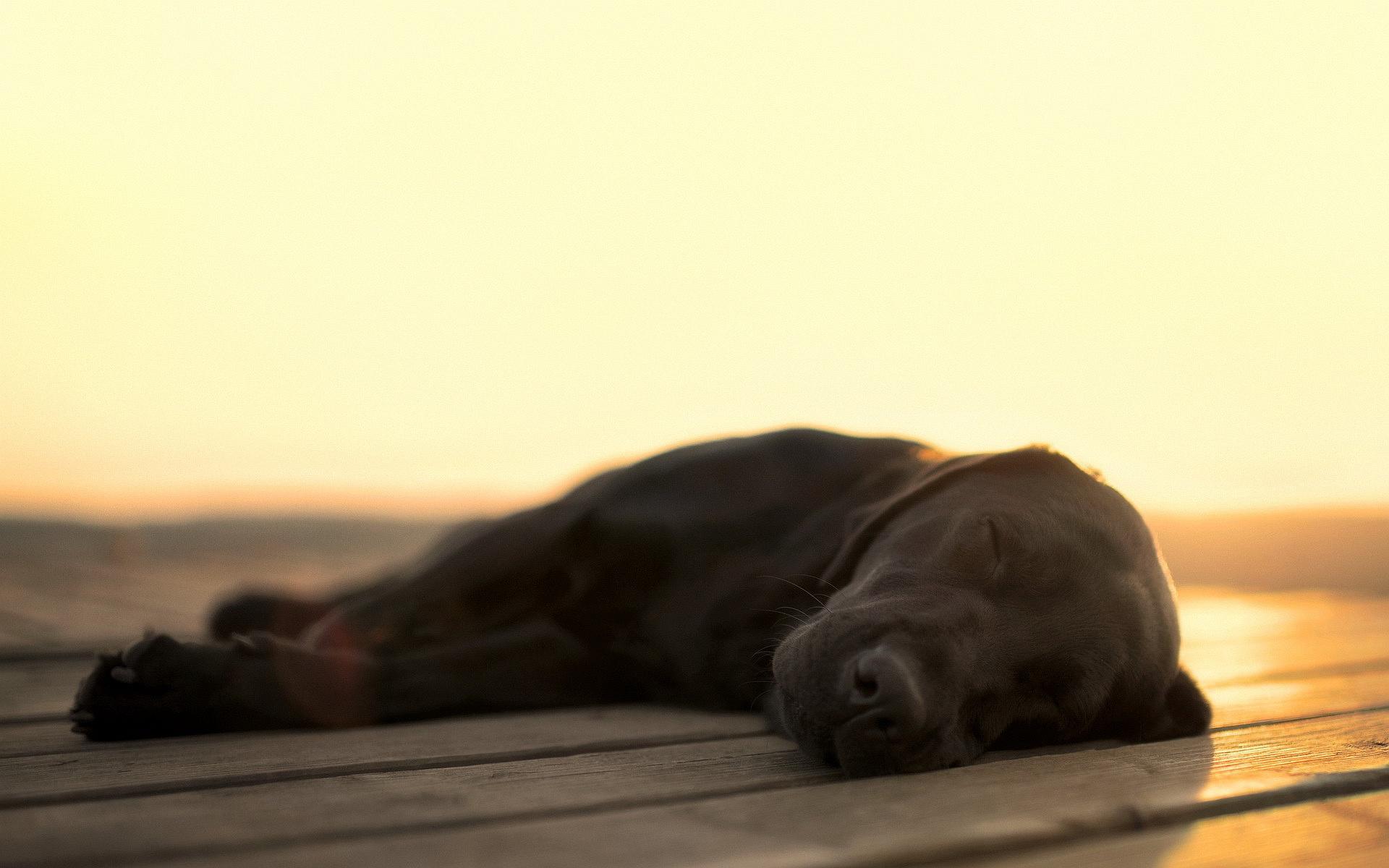 6770314-amazing-sleeping-dog-wallpaper | Phantom Forest Blog